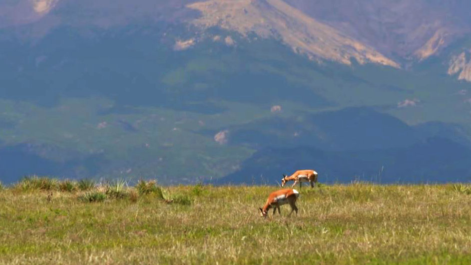 Danny Farris faces challenging conditions but a change in tactics leads to pronghorn success.