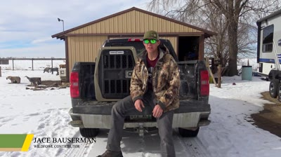 Build a foundation on these simple steps before moving your duck dog on to complex training.