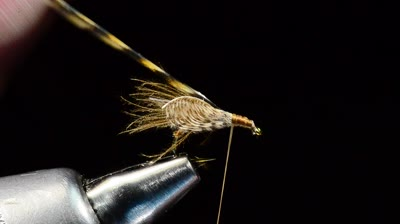 Here's a step-by-step guide on how to tie Gerbec's Resting Caddis fly and the materials you'll need.