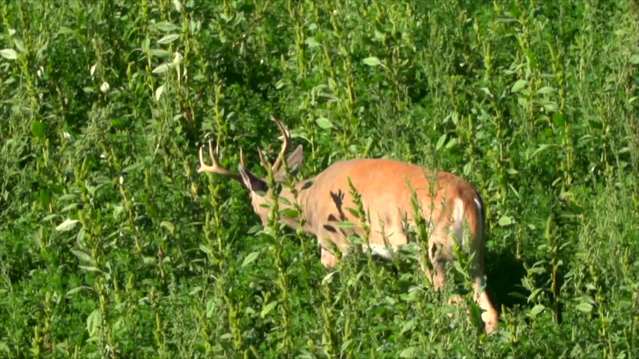 """Bowhunter Assistant Editor Brian Fortenbaugh hunts for a velvet-racked whitetail in Montana. In """"Dead On,"""" Randy Ulmer shares advice on verifiers."""