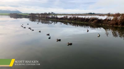 Follow these simple suggestions to get the most out of your duck decoy spreads.