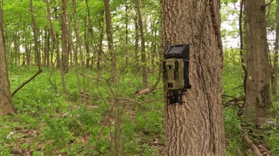 Human intrusion at a minimum as solar-powered game cameras come to market.