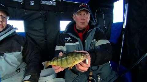 Ice Fishing Perch In Fisherman